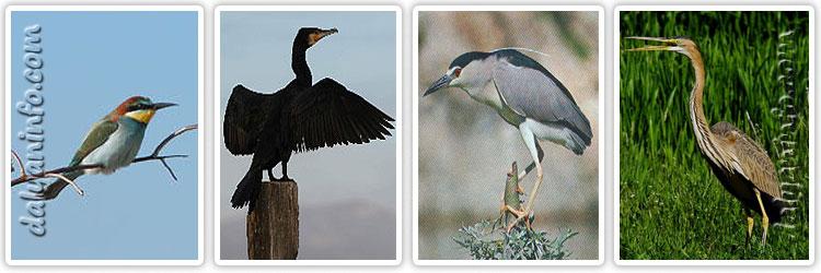 Dalyandaki kuş türleri