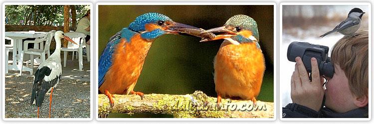 Dalyan Kuş Türleri